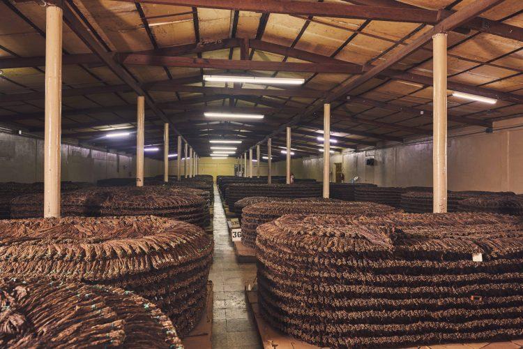 Cigar Pilons Fermentation