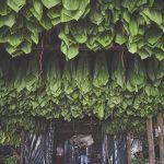 RP_Honduras_Nicaragua_DSC1480