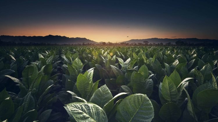 RP_Honduras_Sun Set__DSC3170