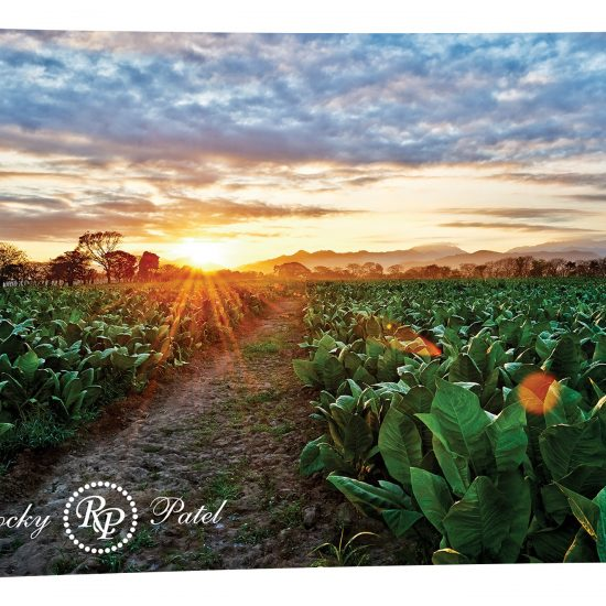 Tobacco Field – Estelí, Nicaragua Tin Sign