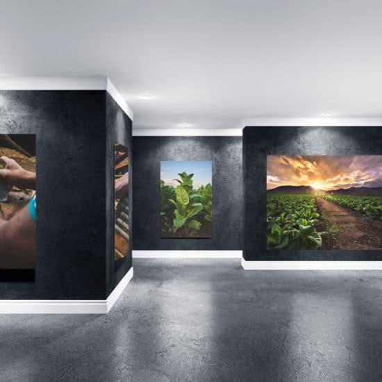 Cigar Art Gallery - Rocky Patel
